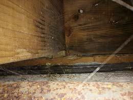 Residential - Commercial - Residential Inspection - Structural Investigation -Triplex 1